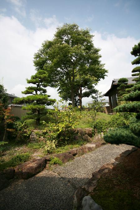 Casa cu copac designist 18