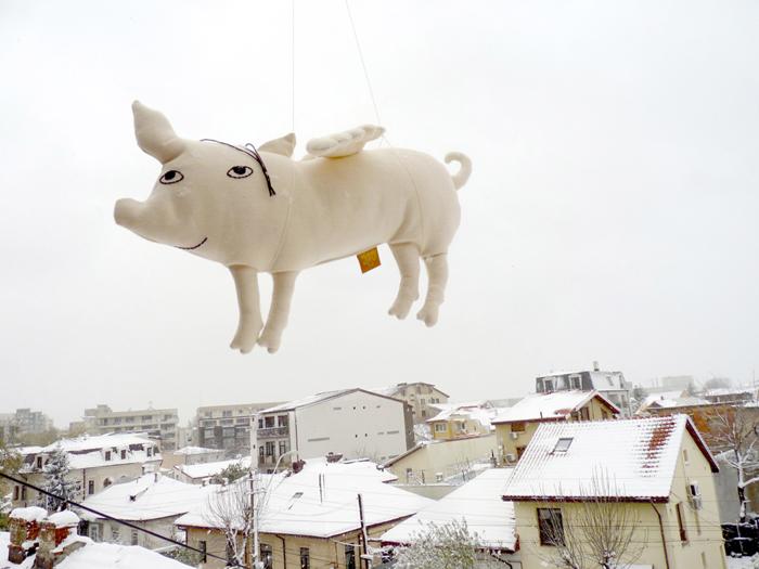 Pernuta Cand o zbura porcul - careCutare