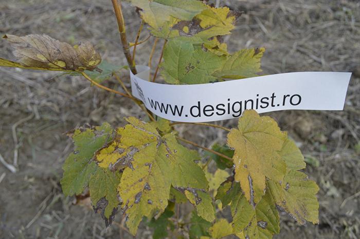 Copacul Designist - Linia 21 (3)