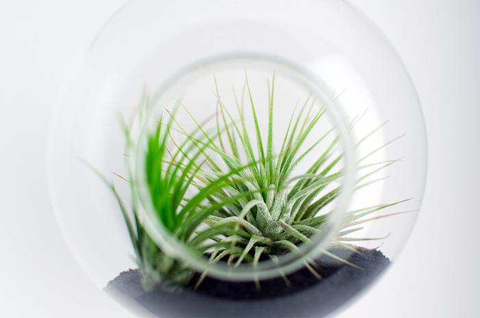 2Aerium.ro - plante aeriene - Designist