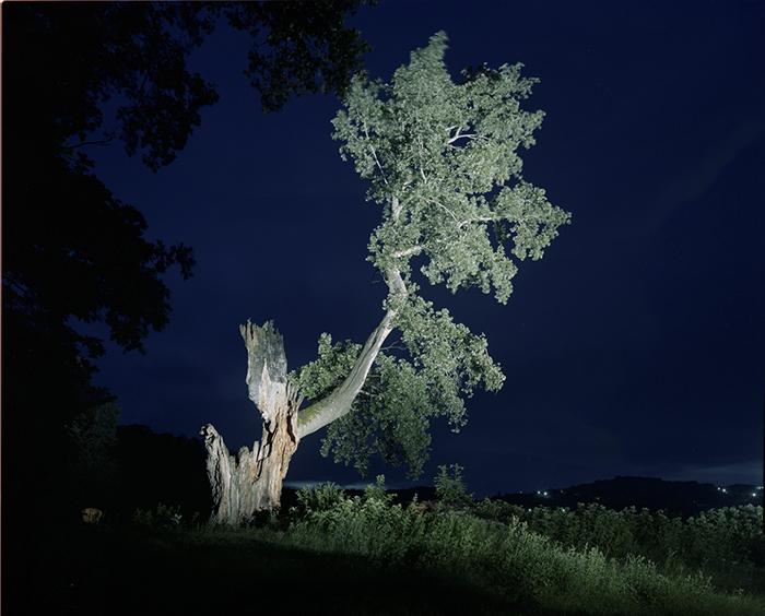 expozitia arbori batrani-designist.jpgexpozitia arbori batrani-designist.jpgimag 1_Plopul de la Ralaila, Vasluiexpozitia arbori batrani-designist.jpg