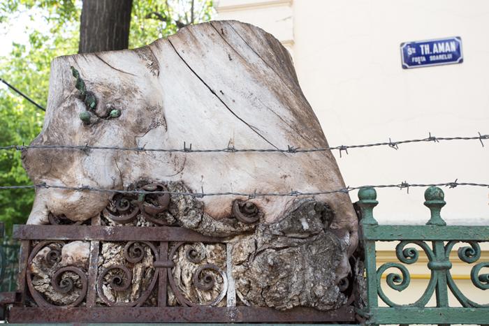 www.alexsidianafoto.ro