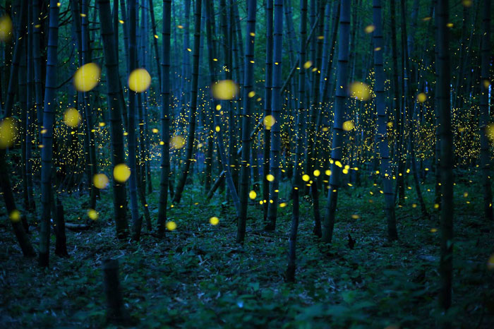 Kei-Nomiyama-Japan-Winner-Open-Low-Light-2016-Sony-World-Photography-Awards_Designist