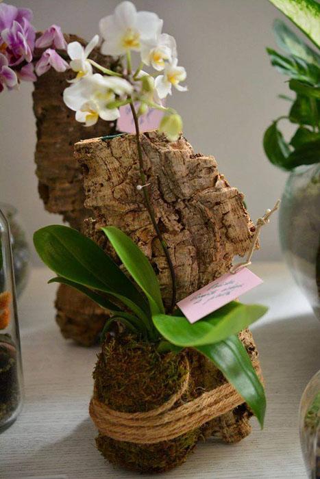 1Terraria - plante ce rezista - Designist