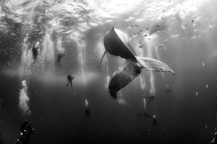 Anuar-Patjane-Floriuk-Whale-Whisperers_Designist