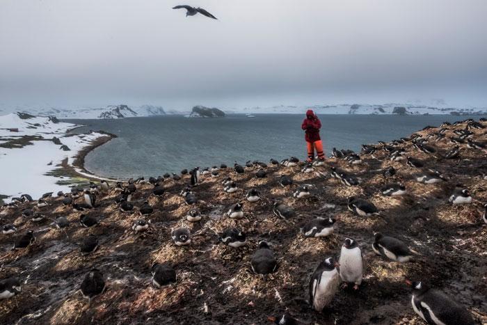 Daniel-Berehulak-An-Antarctic-Advantage_Designist